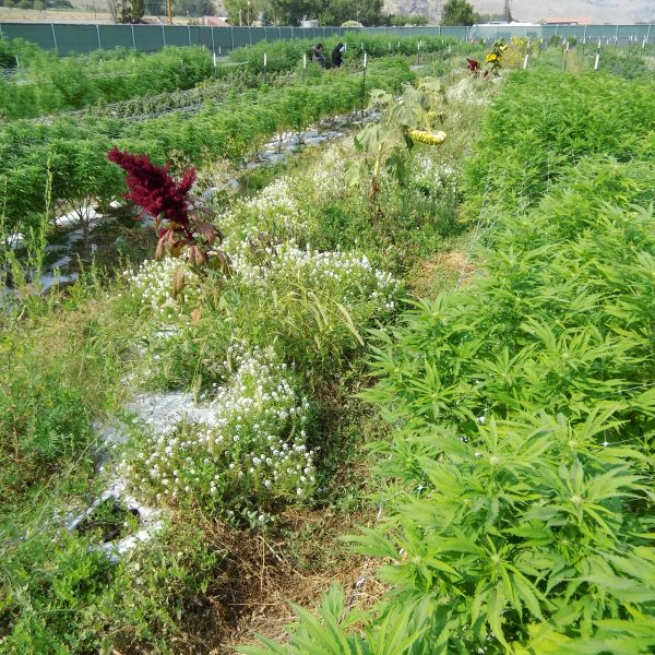 Biodiversity is Critical for Cannabis