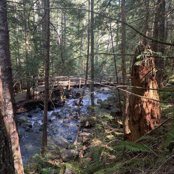A Stoned Hiker's Handbook to Big Creek Loop Trail