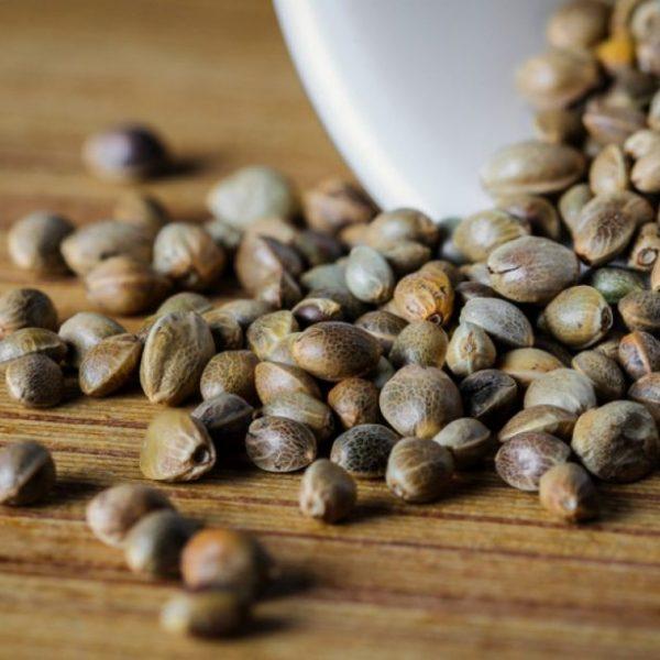 Seed Sale: Walden Genetics Spring Varietals Are Here