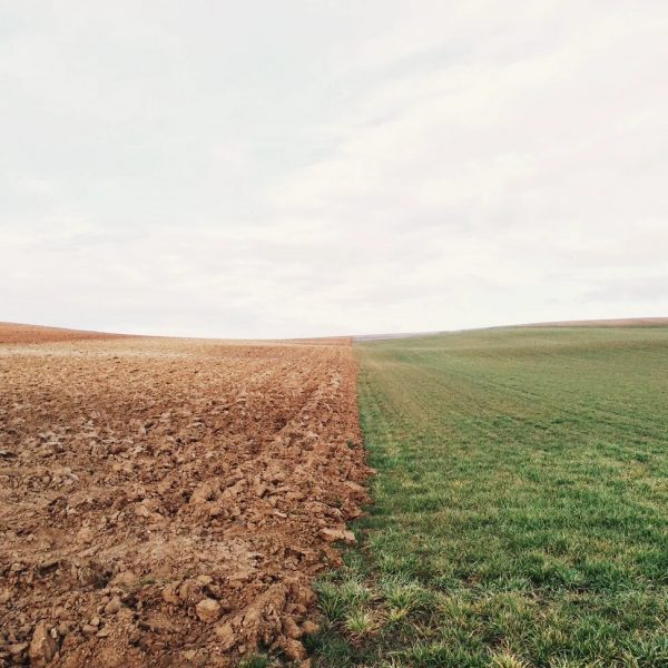 Cover Crops: An Ecological Imperative For Walden Cannabis